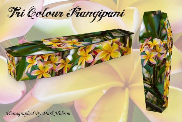 Frangipani Tri Coloured Coffin